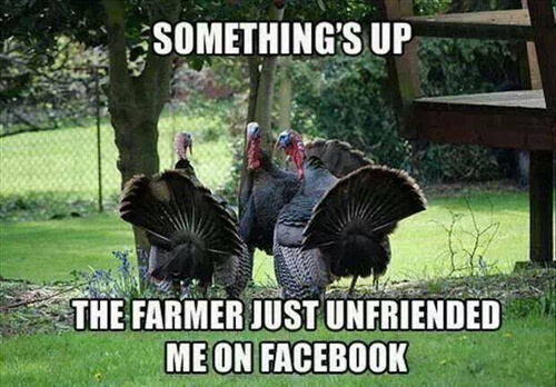 Happy Thanksgiving Funny Pics